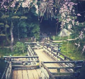 blossom-bridge2