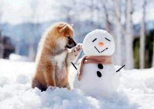 animal-cute-dog-dream-Favim.com-2197704